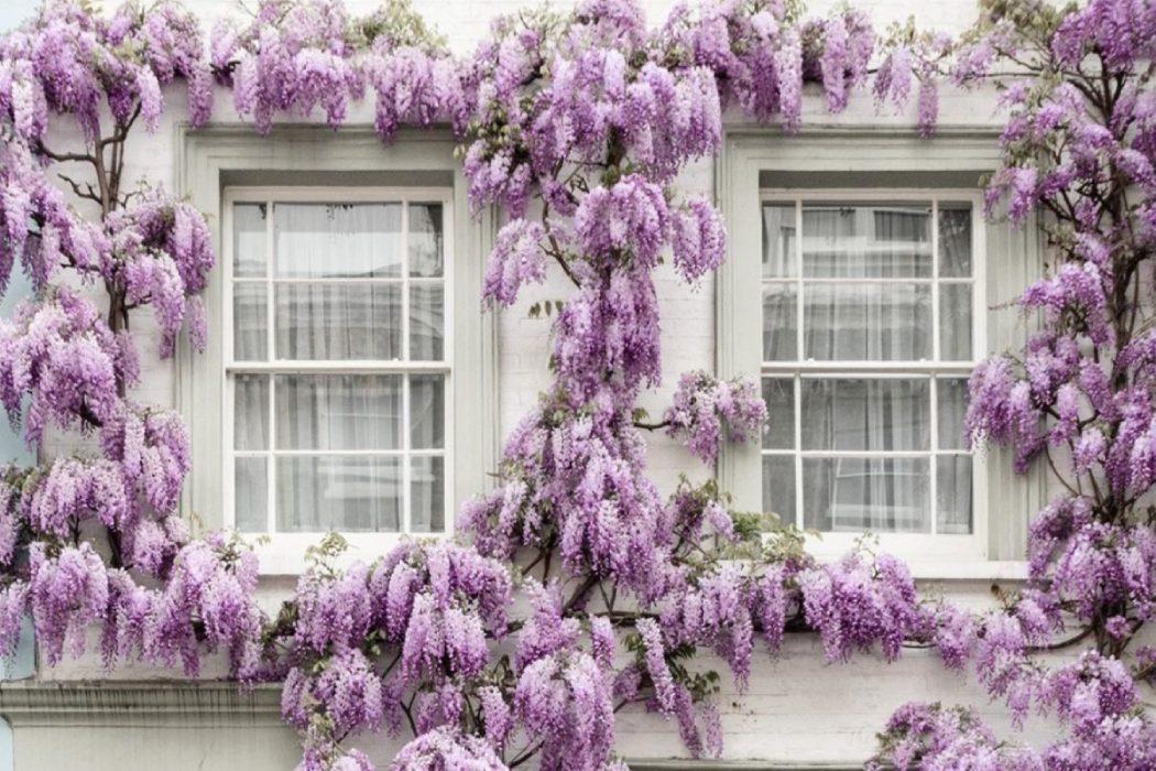 Инстаграмнедели: цветущийЛондон в аккаунте фотографа @sparrowinlondon