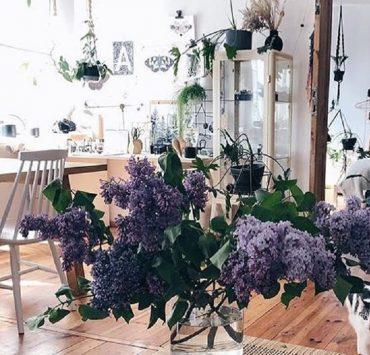 Инстаграм недели: стильное озеленение пространства в аккаунте @plantsindecor