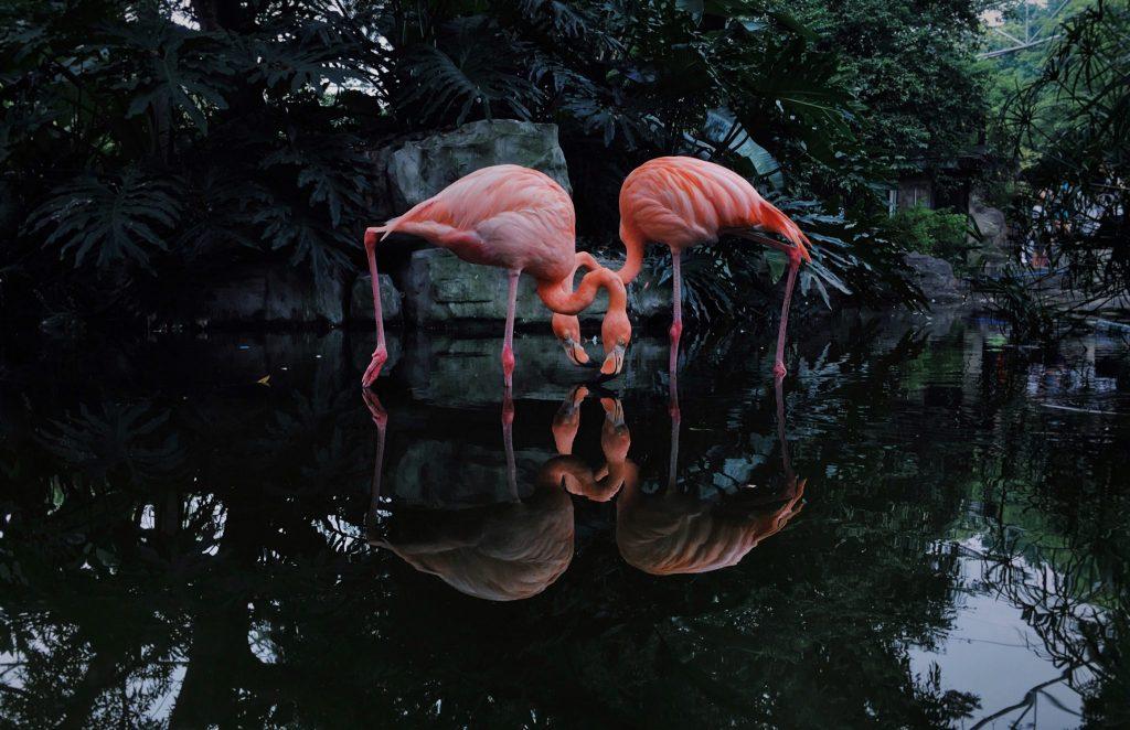 15 самых впечатляющих снимков победителей конкурса iPhone Photography Award 2020