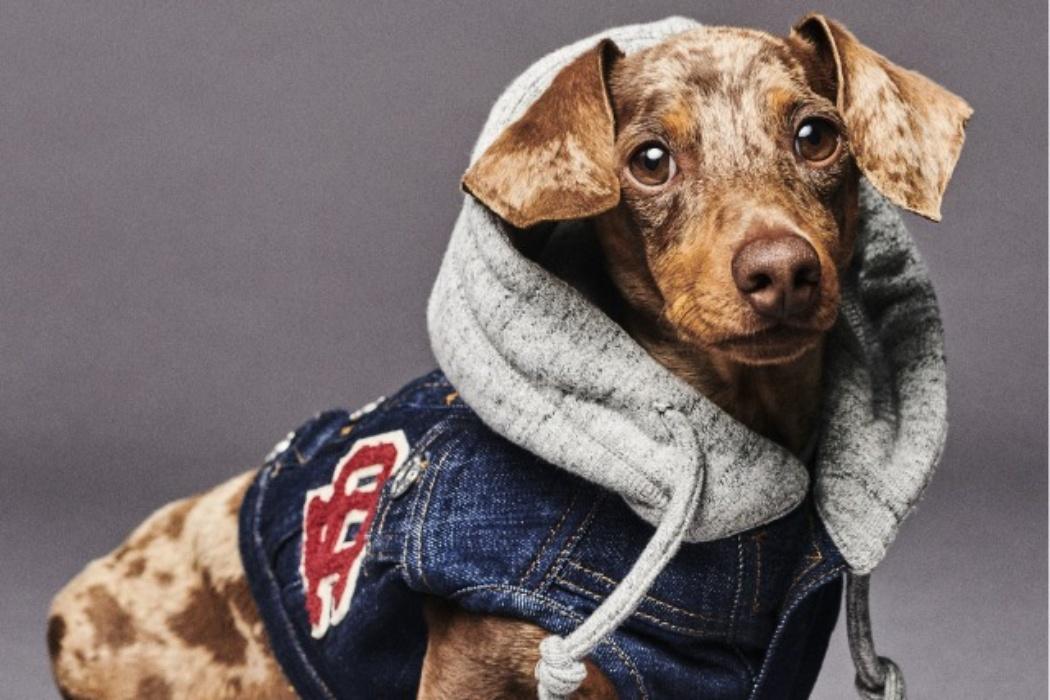 Dsquared2 создал невероятно милую коллекцию одежды и аксессуаров для собак