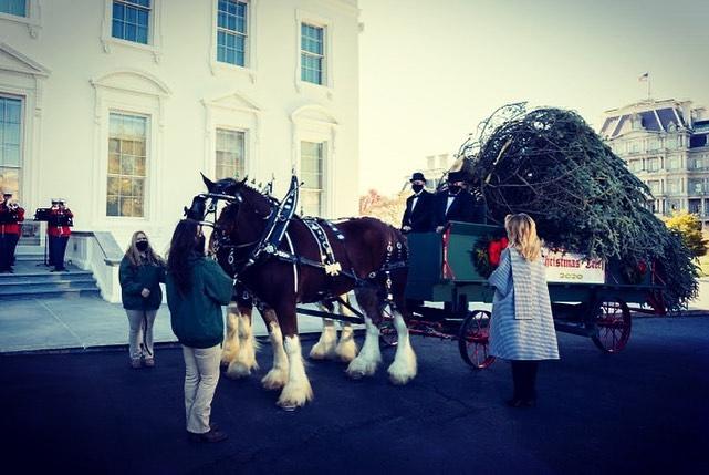 Меланія Трамп розпочала підготовку до Різдва в Білому домі