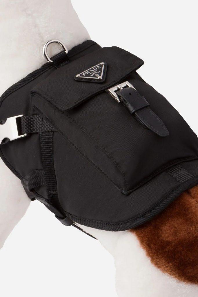 Prada выпустили коллекцию одежды для собак