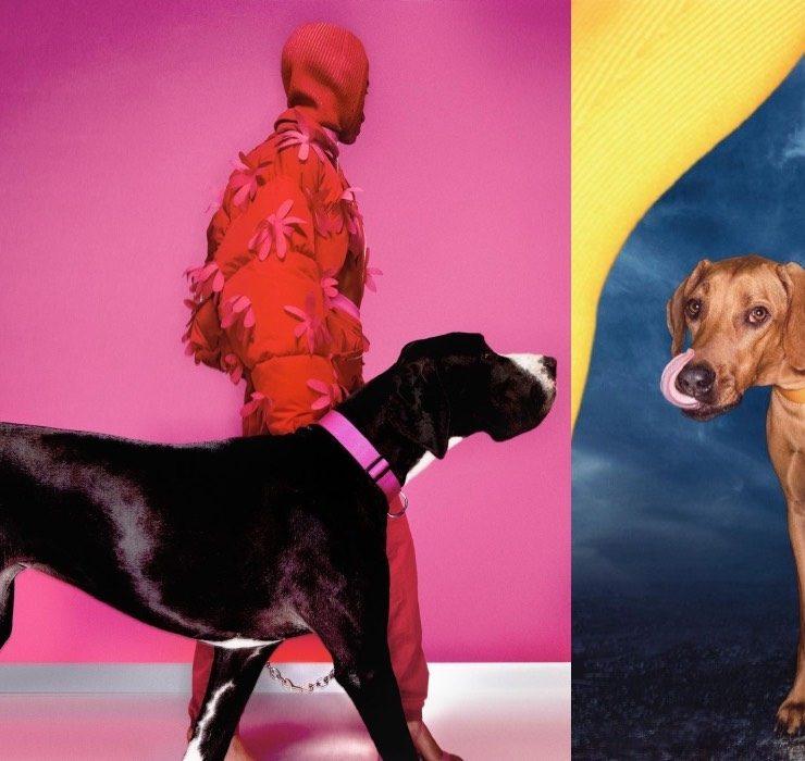 Собаки стали героями рекламной кампании Jacquemus